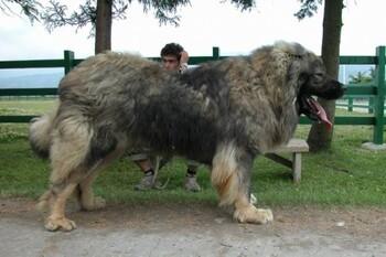Собаки, с которыми не страшно гулять на улице
